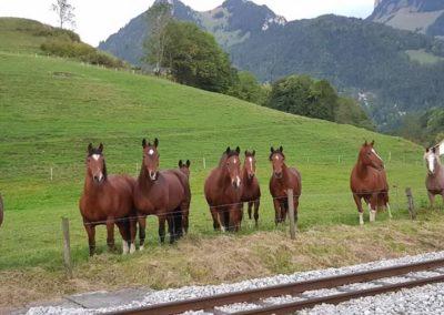 chevaux liberté