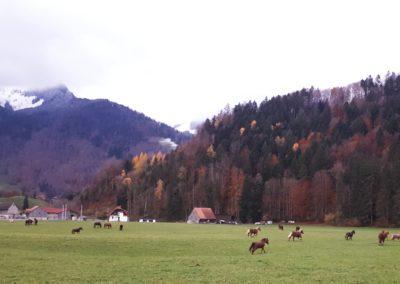 Pâture automne